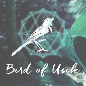 Bird of usik