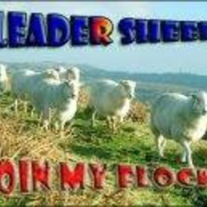 Leader Sheep