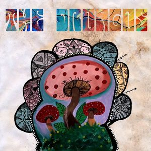 The Drongos