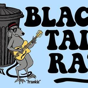 Black Tail Rat