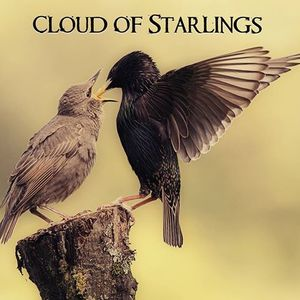 Cloud of Starlings