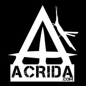 Acrida