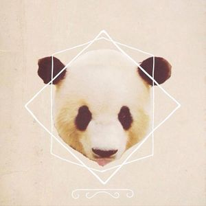 Cocaine Panda