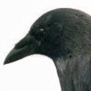 The Raven Club Cooperative