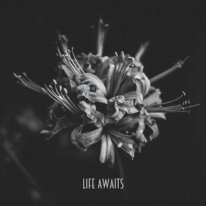 Life Awaits