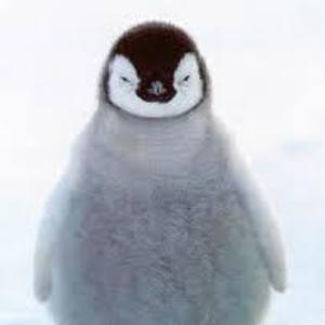 Like Penguins