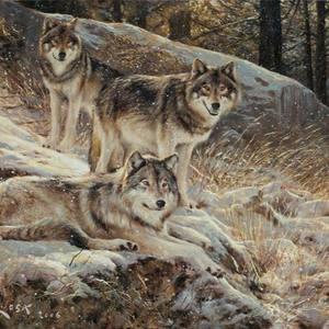 The Strange Wolves