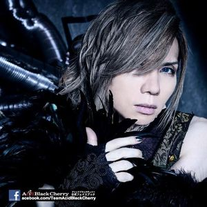 Team Acid Black Cherry(Official)