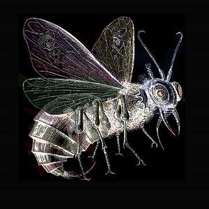 The Moth Body