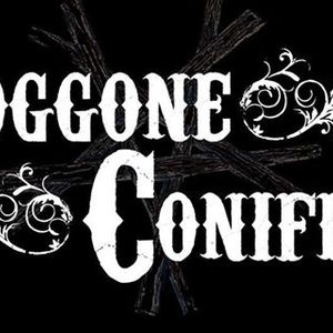 Doggone Conifers