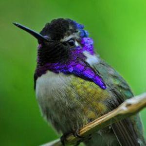 The Hummingbird Brigade