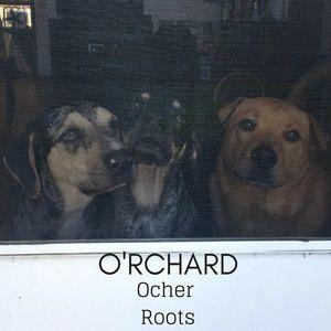 O'rchard Band
