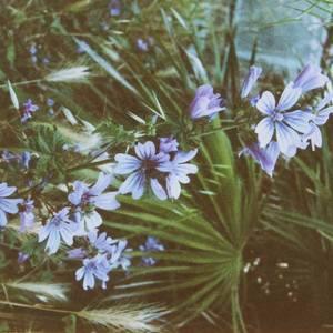 Endlich Blüte