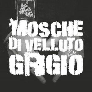 Mosche Di Velluto Grigio
