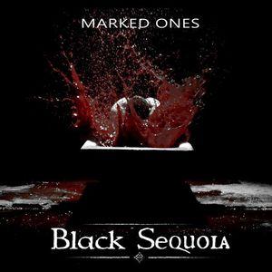 Black Sequoia