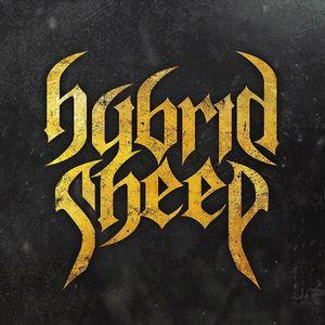 Hybrid Sheep
