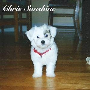 Chris Sunshine