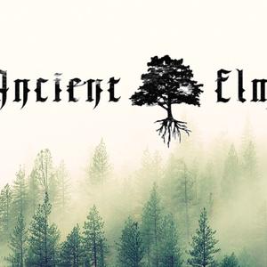 Ancient Elm