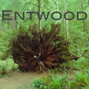 Entwood