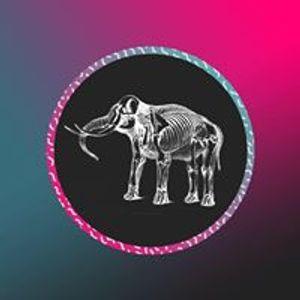 Elephant Sessions